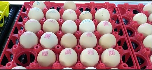 """喷码机让鸡蛋自带""""身份证"""""""